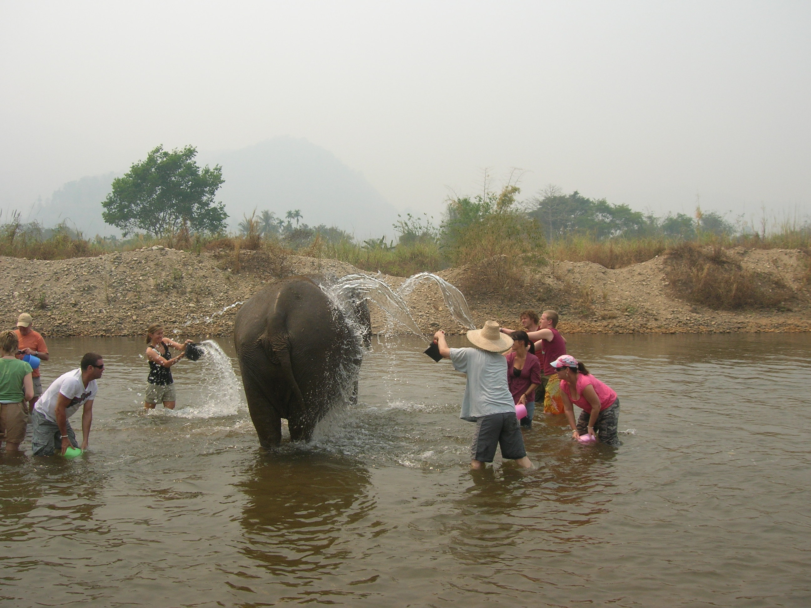 Group washing elephant