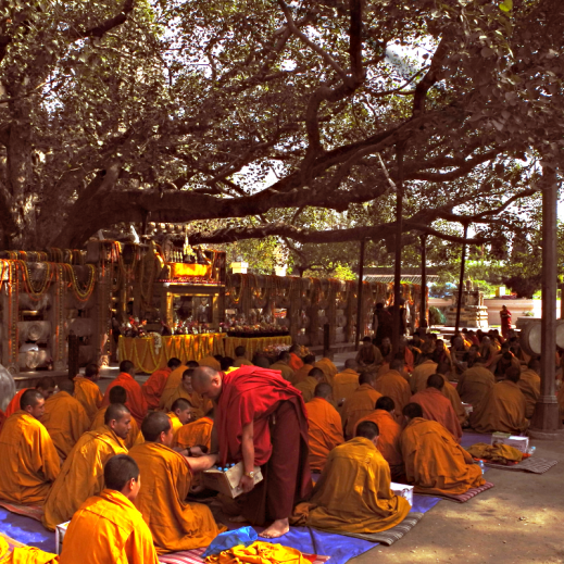 Buddhist monks under a large tree