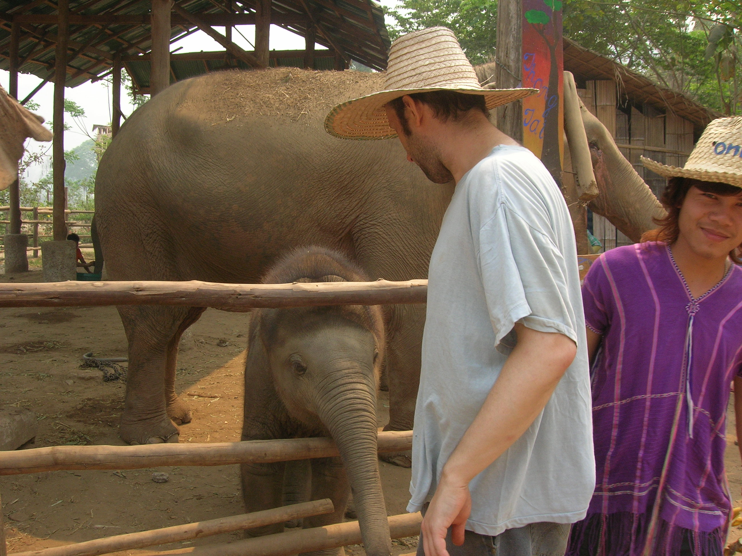 Ian with elephants