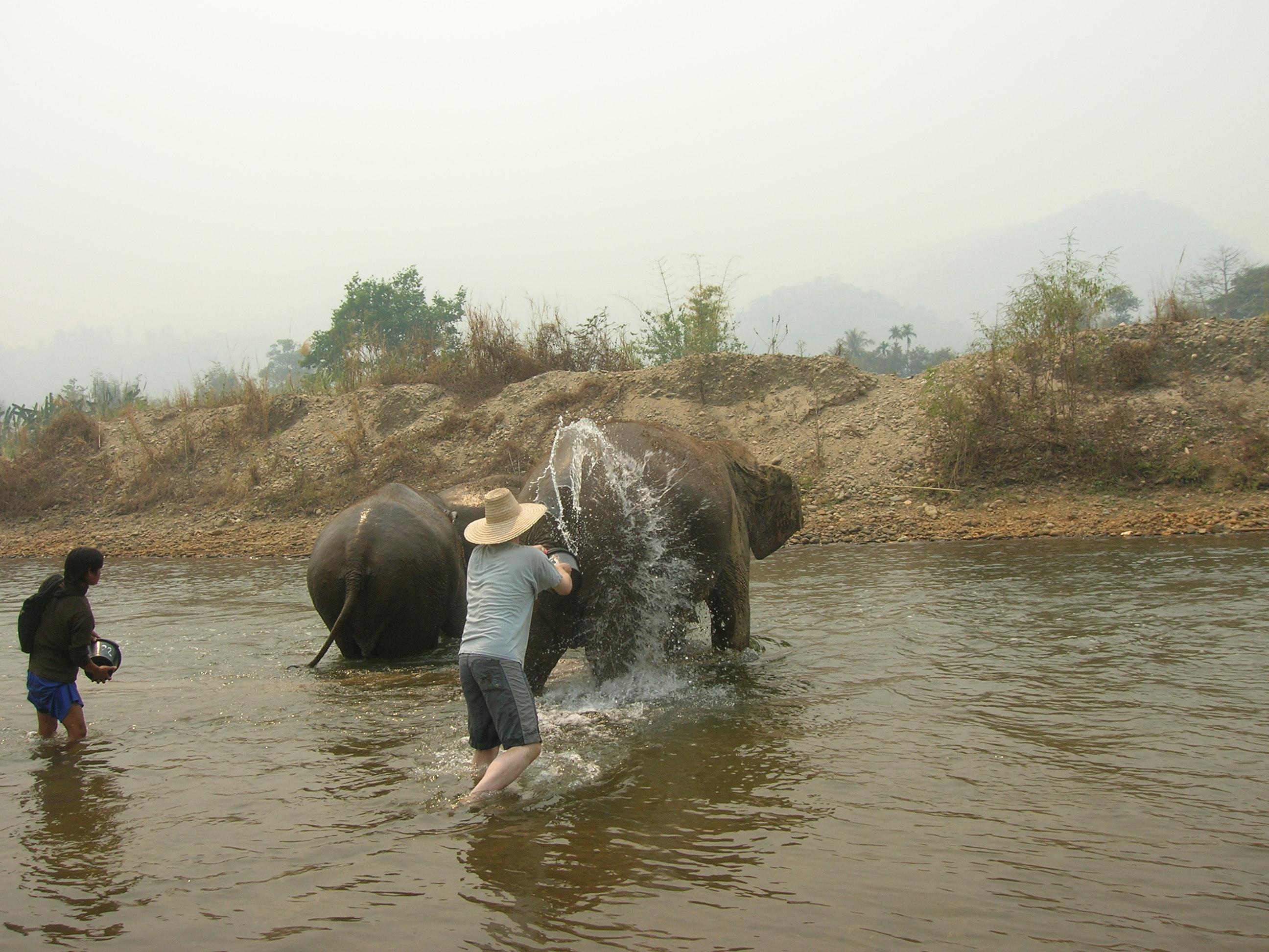 Ian washing elephant