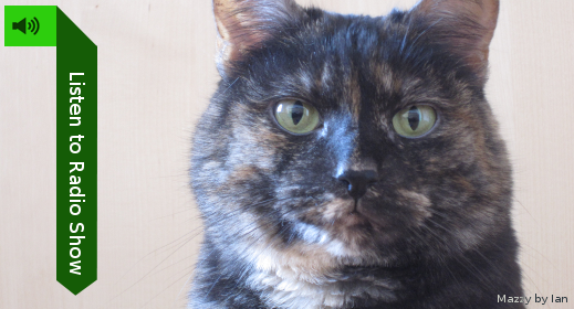 Listen to show! (pic of a tortoiseshell cat)