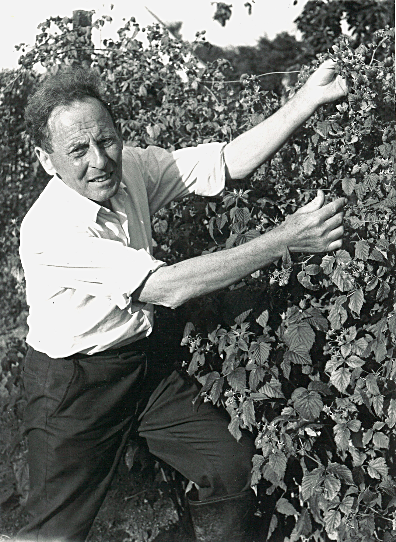 Man in rolled up shirts posing by hedge